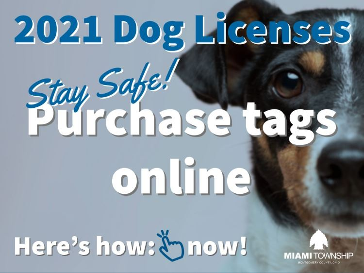 Dog licenses 2021